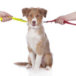 pet custody